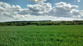 Beelsby walk